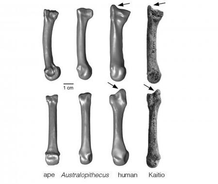 Phát hiện khảo cổ mới về bàn tay của loài người