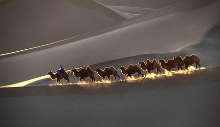 """""""Camels In Desert"""" (Lạc đà trong sa mạc) - Tác giả Lai Yin Bianca Ho (Úc) - Huy chương Bạc FIAP"""