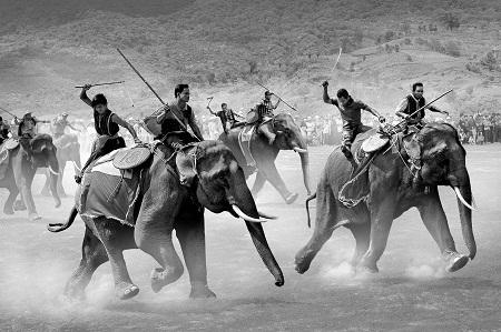 """""""Elephant Race"""" (Đua voi) - Tác giả Trần Phong (Việt Nam) - Bằng Danh dự FIAP"""