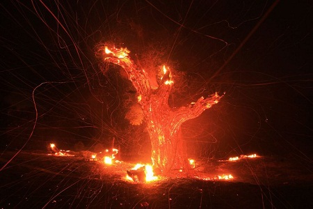 Ngày 7/8: Một trận cháy rừng ở ngoại ô thành phố Los Angeles, Mỹ, thiêu rụi một diện tích hơn 20km