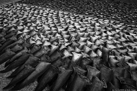 Một bãi chứa hàng triệu lốp xe cũ ở khu đô thị Sesena, Tây Ban Nha.