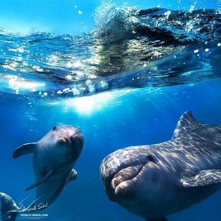 Những chú cá voi có những cái tên riêng để gọi nhau.