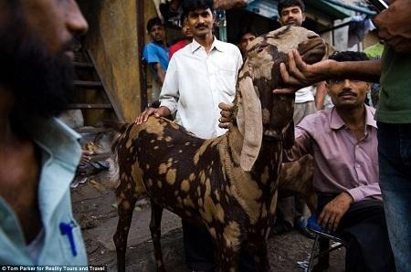 Giá thuê nhà ở Mumbai rất cao nên nhiều người không thể chuyển ra khỏi khu ổ chuột Dharavi.