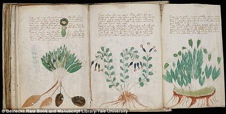 Một vài trang trong cuốn sách kỳ bí có niên đại 600 năm tuổi.