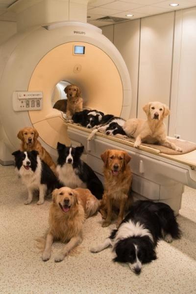 Những chú chó tại trung tâm nghiên cứu the MR Research Centre (Budapest).