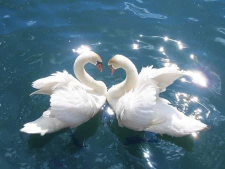 Những giả thiết về nguồn gốc của biểu tượng tình yêu