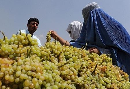 Những người phụ nữ Afghanistan mua nho bên hè phố ở Kabul (Ảnh: Shah Marai)