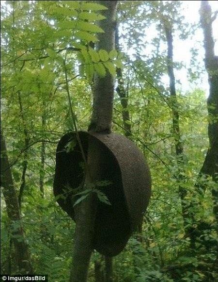 """Một cái cây """"thích"""" đội mũ."""