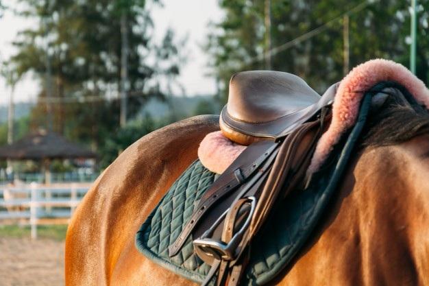 Ngành học nhằm nghiên cứu về mối quan hệ giữ con người và ngựa, cũng như hành vi của những chú ngựa (Ảnh: Freepix)