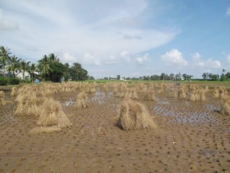 Xây dựng Làng ứng phó thông minh với BĐKH sẽ giúp nông dân rất nhiều trong sản xuất nông nghiệp.