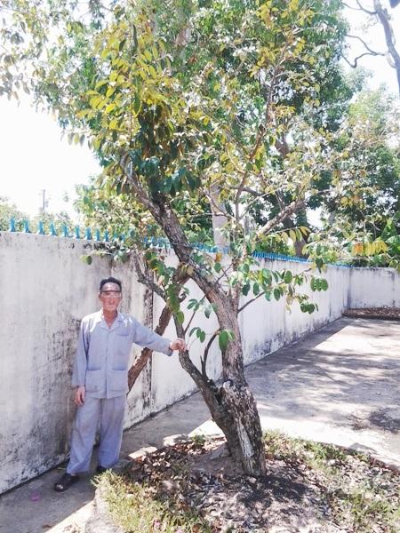 ...nơi có cây vú sữa được nhân giống từ cây vú sữa ở khu vườn Bác ngoài Hà Nội.