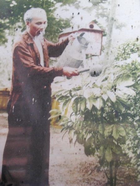 Bức ảnh Bác Hồ đang tưới cây vú sữa của đồng bào miền Nam gửi tặng Bác.