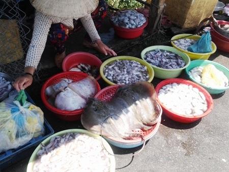 Nhiều loại hải sản được bày bán phục vụ khách mua khi đến với vùng biển Gành Hào.
