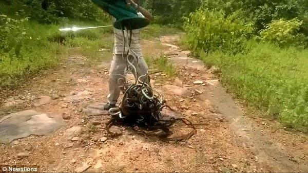 Salem Khan đổ túi đựng chứa hàng trăm con rắn ra ngoài