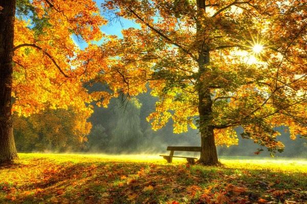 Mang sắc màu mùa thu lên màn hình máy tính với bộ hình nền tuyệt đẹp - 5
