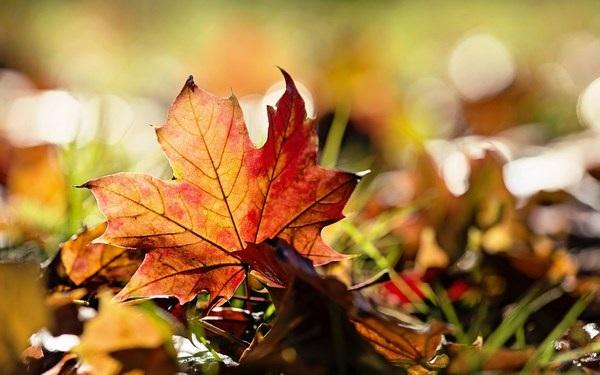 Mang sắc màu mùa thu lên màn hình máy tính với bộ hình nền tuyệt đẹp - 3