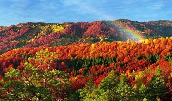 Mang sắc màu mùa thu lên màn hình máy tính với bộ hình nền tuyệt đẹp - 8