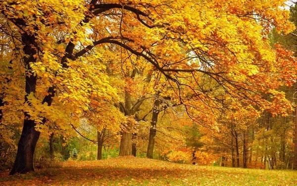Mang sắc màu mùa thu lên màn hình máy tính với bộ hình nền tuyệt đẹp - 20