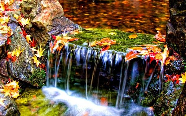 Mang sắc màu mùa thu lên màn hình máy tính với bộ hình nền tuyệt đẹp - 21