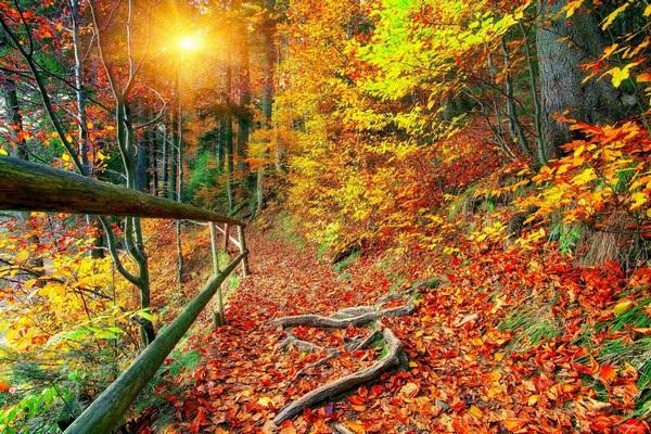 Mang sắc màu mùa thu lên màn hình máy tính với bộ hình nền tuyệt đẹp - 16