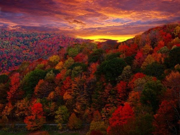 Mang sắc màu mùa thu lên màn hình máy tính với bộ hình nền tuyệt đẹp - 15