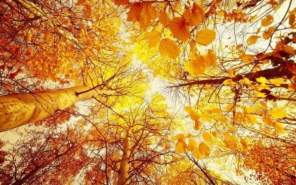 Mang sắc màu mùa thu lên màn hình máy tính với bộ hình nền tuyệt đẹp - 9