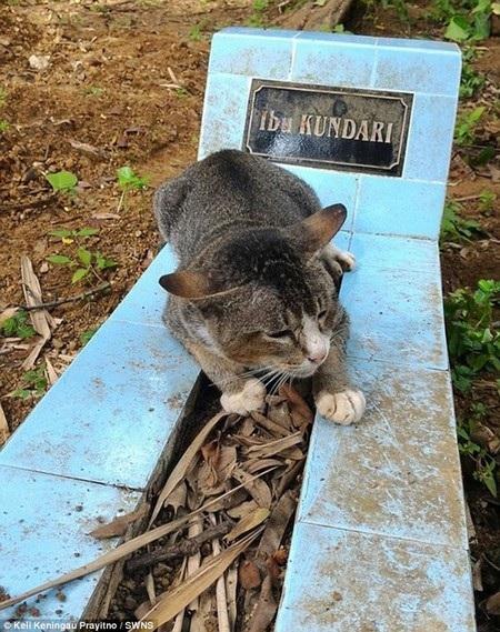 Chú mèo nằm bên mộ chủ của mình suốt một năm, kể từ khi người chủ qua đời