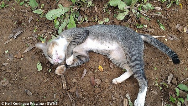 Chú mèo chỉ chơi đùa xung quanh ngôi mộ và vẫn ngủ lại hàng đêm bên ngôi mộ của chủ