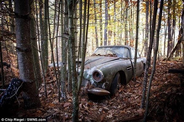 Chiếc Aston Martin DB4 nằm phơi mưa nắng trong một khu rừng từ những năm 1973 mãi cho đến gần đây