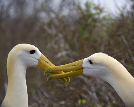 11 động vật chung thủy nhất thế giới tự nhiên