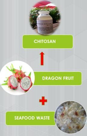 Chitosan: Nguyên liệu quý từ vỏ tôm, cua - 7