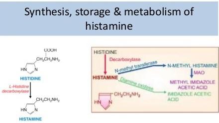 Histamine: Chất sinh học, gây dị ứng và nhiễm độc? - 2
