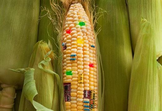 Giống cây biến đổi gen: Ai bán giống cho người nông dân?