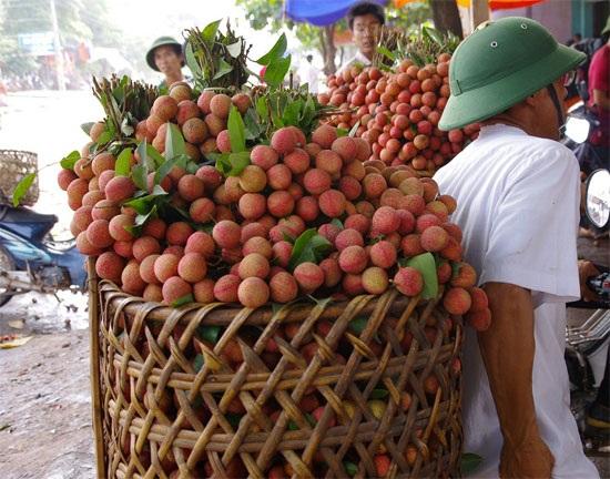 Tại Trung Quốc hiện đã bắt đầu mùa vải sớm ở các tỉnh Quảng Đông, Phúc Kiến, Hải Nam...