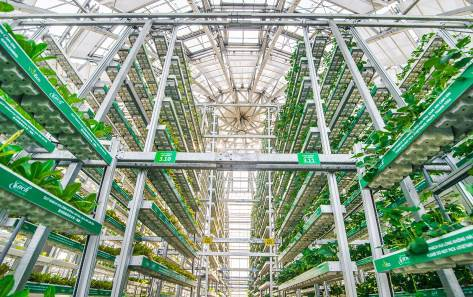 Khám phá nông trường thông minh và hiện đại nhất của Vingroup - 3