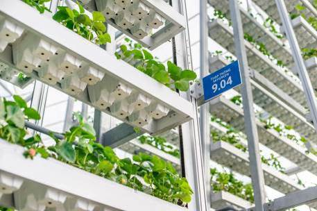 Khám phá nông trường thông minh và hiện đại nhất của Vingroup - 5
