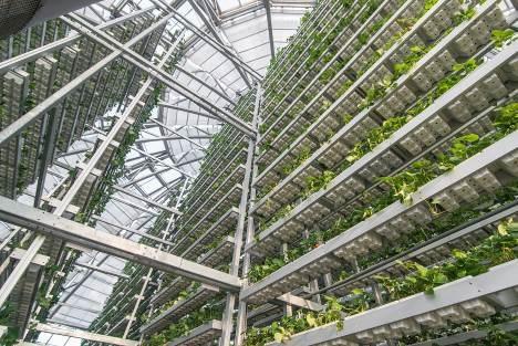 Khám phá nông trường thông minh và hiện đại nhất của Vingroup - 6