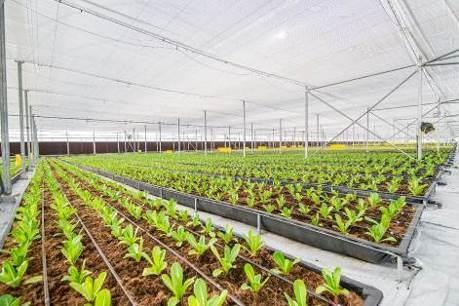 Khám phá nông trường thông minh và hiện đại nhất của Vingroup - 7