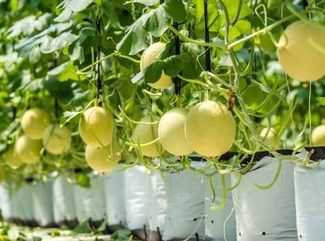 Khám phá nông trường thông minh và hiện đại nhất của Vingroup - 8
