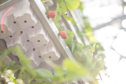 Khám phá nông trường thông minh và hiện đại nhất của Vingroup - 9
