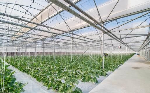 Khám phá nông trường thông minh và hiện đại nhất của Vingroup - 10