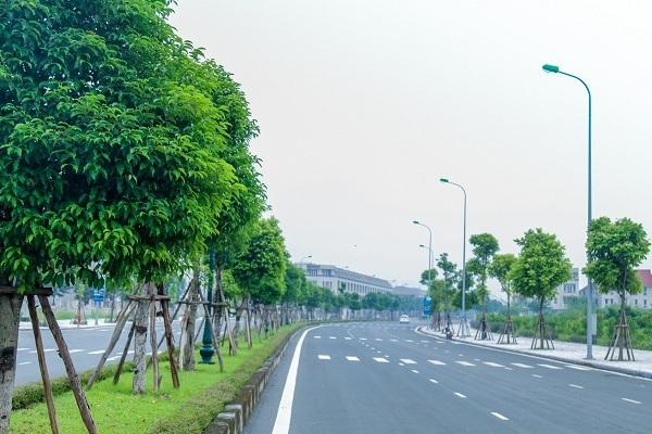 Tuyến đường nội khu rộng với hàng nghìn cây xanh được trồng mới