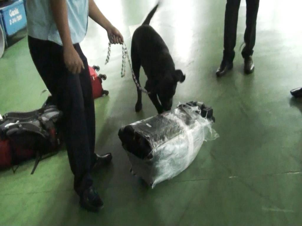 Chó nghiệp vụ kiểm tra túi xách của nữ hành khách