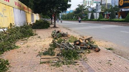Cây xanh trên đường Hùng Vương bị cưa ra thành từng khúc gỗ.