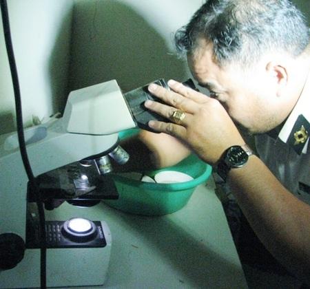 Do thiếu trang thiết bị nên việc kiểm dịch tôm giống hiện nay ở Bạc Liêu chỉ bằng kính hiển vi nên không thể phát hiện các loại bệnh do vi rút. Đây là một bất cập cần tháo gỡ từ cơ quan có thẩm quyền.