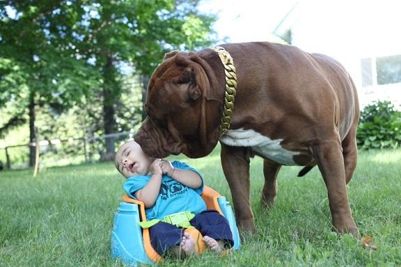 """""""Mọi thứ đều được tôi theo dõi. Tôi sẽ không bao giờ để Jackson nằm trên sàn nhà một mình với con chó."""