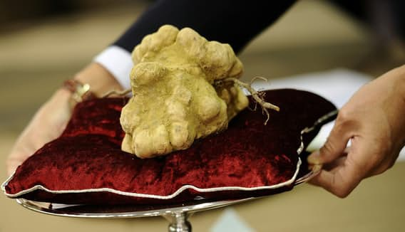 """Cận cảnh khối nấm trắng được ví như """"kim cương"""" trong ngành thực phẩm"""