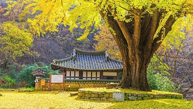 Vẻ cổ kính của ngôi chùa dưới tán cây