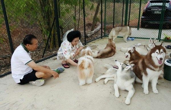 Cafe chó Husky giữa lòng Bangkok - 1
