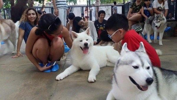 Cafe chó Husky giữa lòng Bangkok - 4